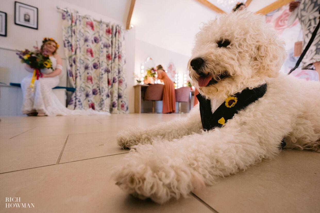 dog at Gloucestershire wedding photographer bridal preparation